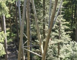 neuschoenaubaumwipfelpfad25