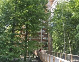 ruegenbaumwipfelpfad04